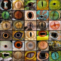 Reptile eyes collage