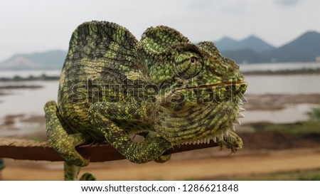 reptile found in the bank of Godavari river in India
