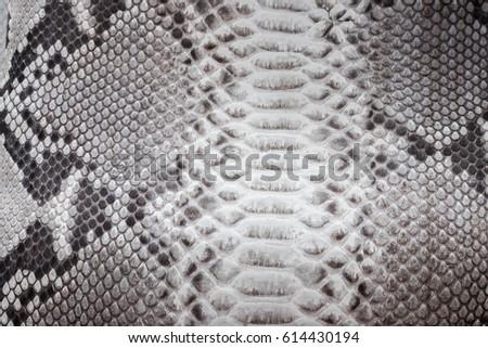 Reptile snake texture closeup, fashion zigzag snakeskin python picture. #614430194