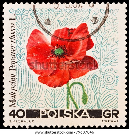 REPUBLIC OF POLAND - CIRCA 1967: A stamp printed in the Republic of Poland, T.Makpolny, Papaver rhoeas L., PWPW-67, circa 1967