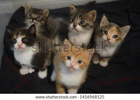 Rescue kittens in foster home. Feline siblings  #1456968125