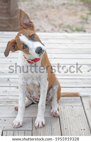 Rescue puppy getting a second chance Stock photo ©
