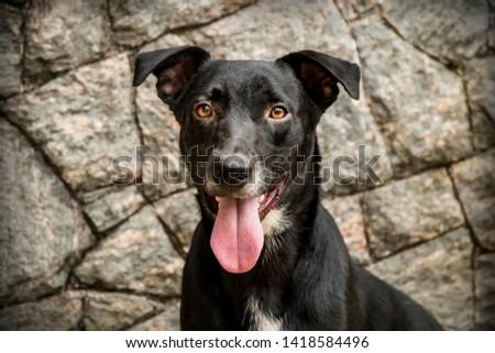 Rescued black mutt dog. rocks background #1418584496