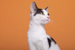Rescued cats having a professional photoshoot that helps them finding a loving home.