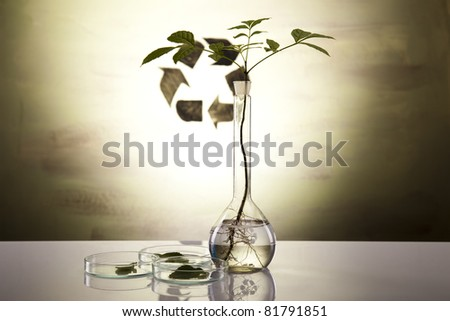 Research, plants growing in test tubes in a research laboratory