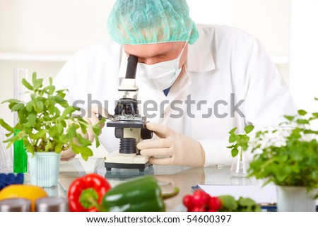 Researcher with microscope with a GMO vegetables. Genetically modified organism or GEO here transgenic plant is an plant whose genetic material has been altered using genetic engineering techniques