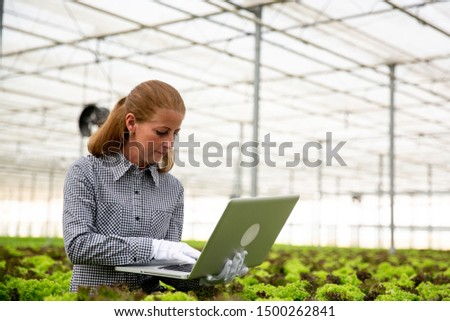Researcher woman notices something in laptop while sitting next to a salad plantation. Modern greenhouse #1500262841