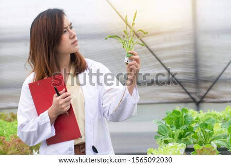 Researchers in white uniform are checking the quality of vegetables in  hydroponic farm, female biotechnology engineer is investigating vegetables that have leaf leaf problems, science and research