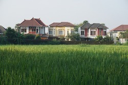 residential buildings on the edge of rice fields