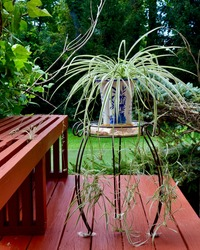 Residential house gardening view, with red deck bench and Chinese orchid plant growing in an artistic flower pot, placed in an elegant metal plant stand.