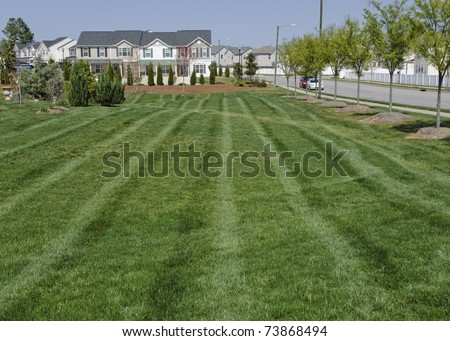 Residential suburban street with large lawn in springtime