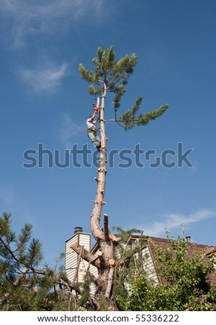 Residential tree trimming, topping and removal