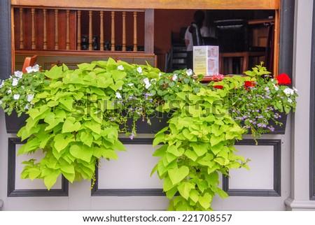 Restaurant terrace with vegetation.