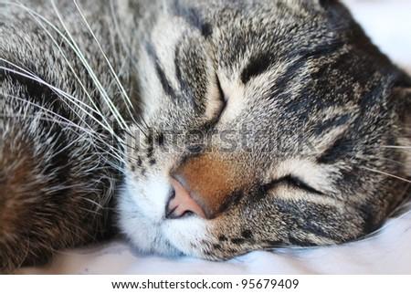 Resting cat - stock photo