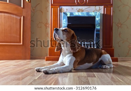 resting dog on wooden floor near to a fireplace
