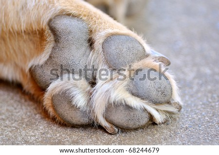 Resting dog's paw close up