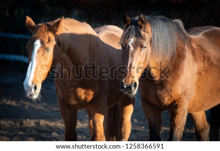 retired horses dozing off in the sun