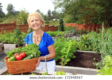 Retired woman in the vegetable garden holding a basket of freshly picked lettuce and tomatoes. Also available in vertical.