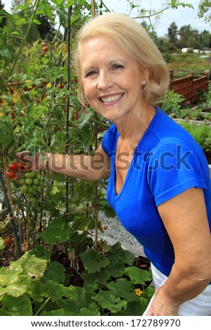 Retired woman in the vegetable garden holding tomatoes on the vine.