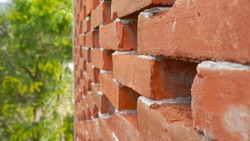Retouched Brick Wall and Greeneries on a Nice Sunny Day
