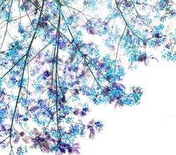 Retro blue color tone of Flam-boyant flower background