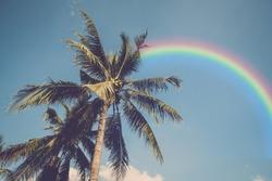 Retro coconut tree and sky with rainbow