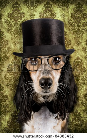 Retro dog with stove pipe hat and glasses Foto stock ©