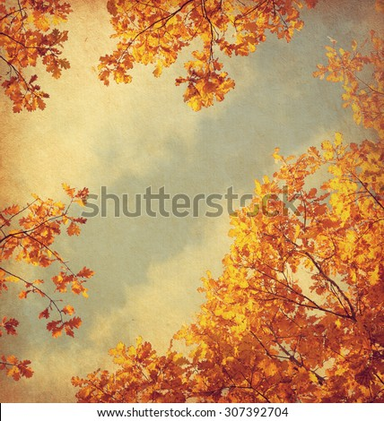 Retro image of Autumn leaves on the sky background. Added paper texture.  Toned image #307392704