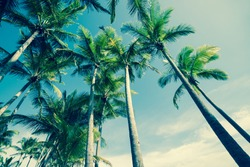 Retro image of tropical palm swaying gently in breeze trees low angle view.
