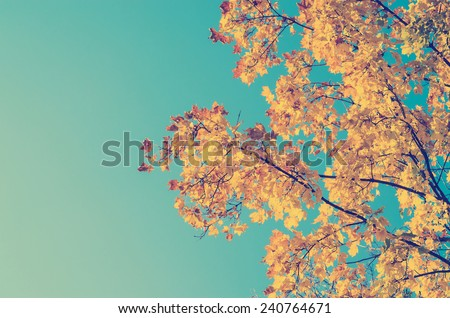 Retro Photo Of Autumn Golden Tree Leaves