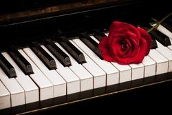 Retro piano keyboard and red rose closeup