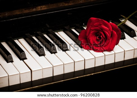Retro piano keyboard and red rose closeup