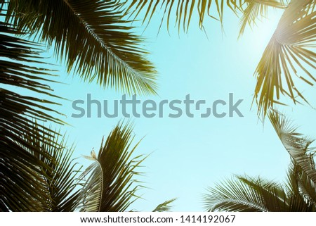 Retro style Coconut Palm tree with blue sky , Palm trees at tropical background ,  travel summer and vacation holiday concept #1414192067