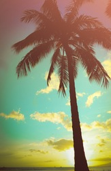 Retro Styled Lone Palm Tree In Hawaii