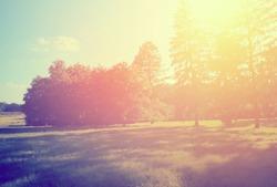 Retro summer scene