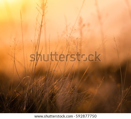 Retro Vintage Background Texture Of Shallow Focus Meadow Grass At Sunset