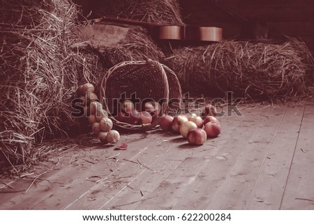 Retro vintage style photo. Ripe juicy apples in a wicker basket. Onion. Barn. A lot of ripe apples on a bale of hay. haystack. inverted pail with apples in wooden vintage hayloft