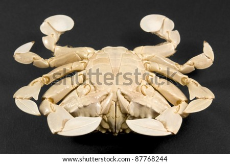 reverse side of a moon crab in dark background