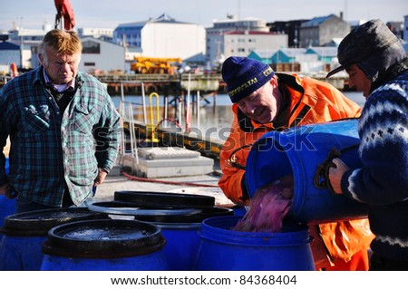 REYKJAVIK, ICELAND - APRIL 7: Icelandic fishermen process and clean fish catch in Reykjavik, Iceland on April 7, 2010. Fishery makes one third of Icelandic economic income (GDP).