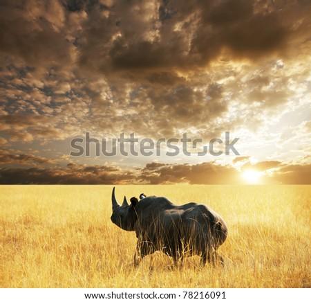 rhino  in Etosha Park