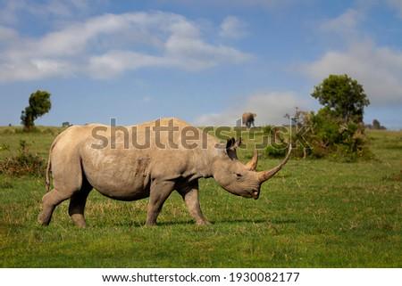 Rhino in Sweetwaters, Ol Pejeta, Kenya, Africa Foto stock ©