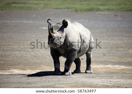 Rhino - Lake Nukuru National Park in Kenya, Africa