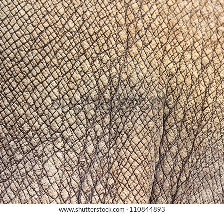 Rhino Skin Texture Background Stock Photo 110844893 ...