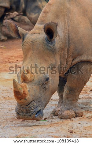 rhino stand alone with dirty skin