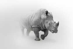 Rhino wildlife art collection white edition, animal grayscale wallpaper