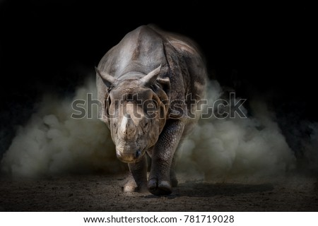 Rhinoceros animal black background