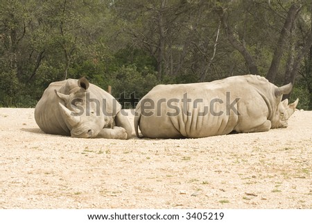 Rhinoceros; Ceratotherium Simum; South Africa