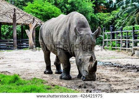 Rhinoceros in the zoo. #426421975