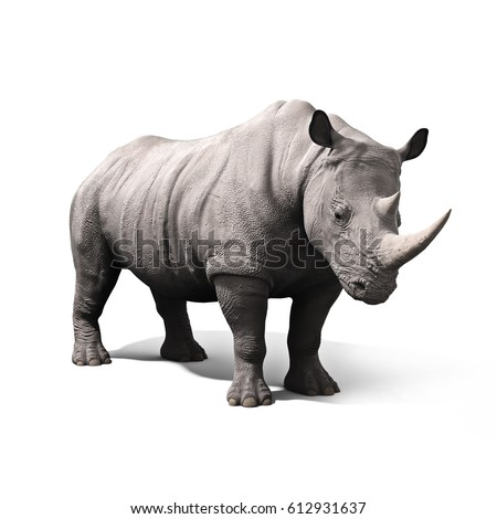 Rhinoceros isolated on a white background. 3d rendering