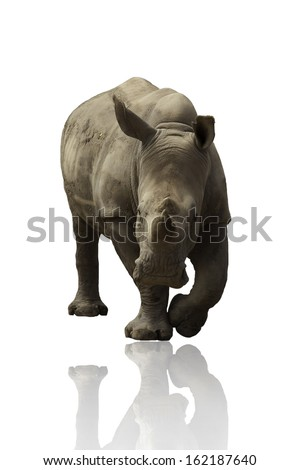 Rhinoceros on a white background.